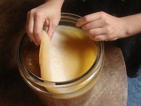 Чайный гриб — антибиотик из банки. Как вырастить самостоятельно