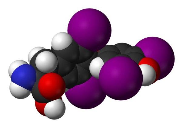 Где живут разные гормоны и зачем они нам нужны?
