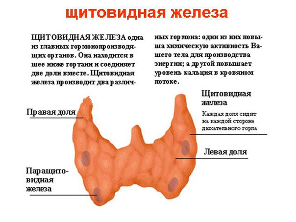 Очищаем щитовидную желeзу